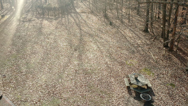before leaf removal